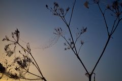 Gota do orvalho durante o nascer do sol colorido calmo foto de stock