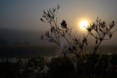 Gota do orvalho em uma linha da aranha durante o nascer do sol calmo foto de stock royalty free