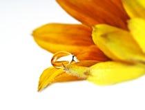 Gota en los pétalos de la flor foto de archivo