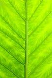 Gota fresca verde de la hoja y del agua Foto de archivo