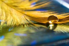 Gota grande em uma pena dourada do ` s do pássaro Pena de pássaro no fundo azul Foco seletivo imagem de stock royalty free