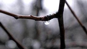 Gota na chuva do quando da árvore filme