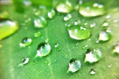 Gota nas folhas Foto de Stock