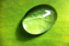 Gota nas folhas Imagem de Stock