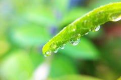 Gota nas folhas Fotografia de Stock