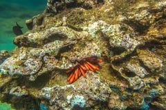 Gota Oahu del mar fotos de archivo