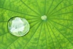 Gota pura Imagem de Stock