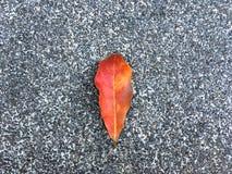 Gota secada vermelha da folha no assoalho granulado e de pedra Fundo de superf?cie cl?ssico da textura foto de stock