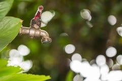Gota velha e do grunge do torneira de bronze e da água no bokeh verde de t Fotos de Stock Royalty Free