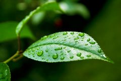 Gotas 1 da chuva Imagens de Stock
