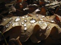 Gotas Imagen de archivo libre de regalías