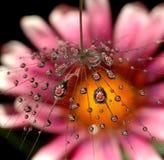 Gotas bonitas da água Imagem de Stock