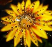 Gotas bonitas da água Imagens de Stock Royalty Free