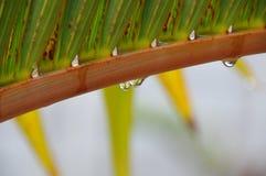Gotas da água Fotografia de Stock Royalty Free