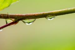 Gotas da água Foto de Stock Royalty Free