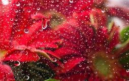 Gotas da água em cima de um fundo da flor Imagens de Stock