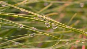 Gotas da água em palhas de uma grama Imagem de Stock