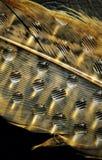 Gotas da água em penas Imagens de Stock Royalty Free