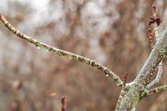 Gotas da água em um ramo pequeno imagens de stock