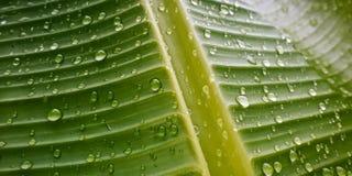 Gotas da água em uma folha Foto de Stock Royalty Free