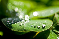 Gotas da água em uma folha Fotografia de Stock