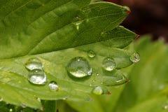 Gotas da água em uma folha Imagens de Stock