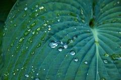 Gotas da água em uma folha Fotos de Stock