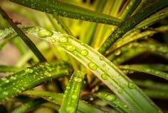 Gotas da água em uma folha da flor Fotografia de Stock