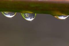 Gotas da água em uma haste da grama Fotografia de Stock