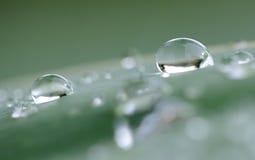 Gotas da água na folha Imagens de Stock Royalty Free