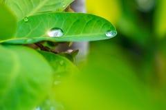 Gotas da água na folha Foto de Stock