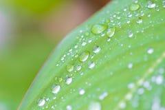 Gotas da água na folha da árvore Fotos de Stock