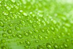 Gotas da água na folha da planta verde Foto de Stock Royalty Free