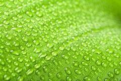 Gotas da água na folha da planta verde Fotos de Stock