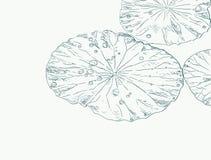 Gotas da água na folha dos lótus ilustração do vetor