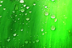 Gotas da água na folha verde Fotografia de Stock