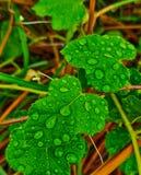 Gotas da água na folha verde após chover foto de stock