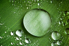 Gotas da água na folha verde fresca fotografia de stock royalty free