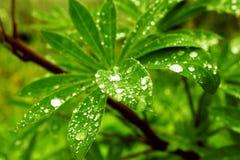 Gotas da água na folha verde fresca Imagem de Stock