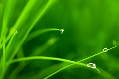 Gotas da água na grama com faísca fotografia de stock royalty free