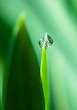 Gotas da água na grama verde Fotografia de Stock Royalty Free