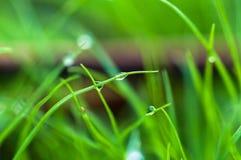Gotas da água na grama verde fotos de stock royalty free