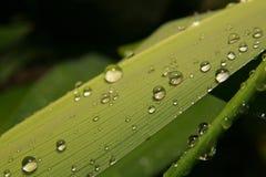 Gotas da água na lâmina da grama Foto de Stock Royalty Free