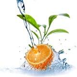 Gotas da água na laranja com folhas verdes imagens de stock royalty free