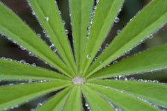 Gotas da água nas folhas Fotografia de Stock
