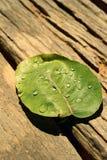 Gotas da água nas folhas Fotos de Stock