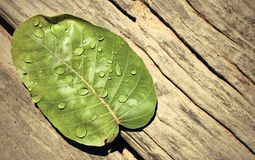 Gotas da água nas folhas Imagem de Stock Royalty Free