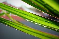 Gotas da água nas folhas Imagens de Stock Royalty Free