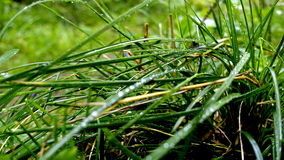 Gotas da água nas folhas e na grama Fotos de Stock