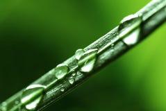Gotas da água no crescimento vegetal luxúria verde fresco da folha Fotografia de Stock